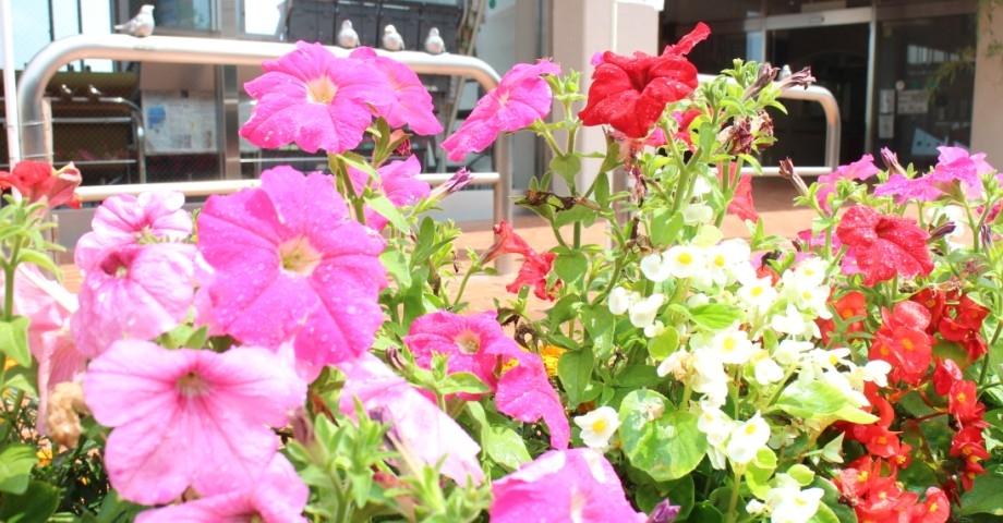 事務室前の花